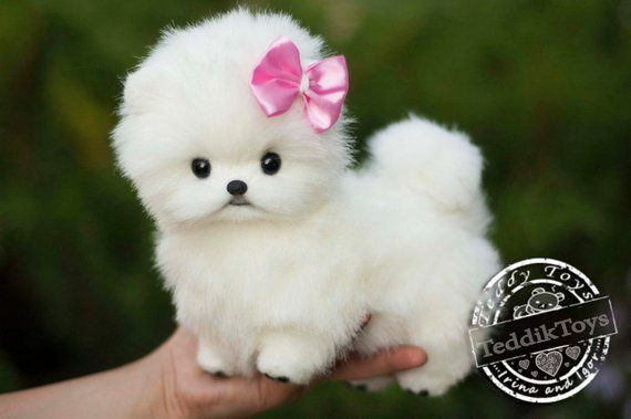 Puppy Spitz Mimi Made To Order Teddy Dog Little Spitz