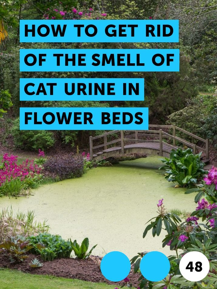 How To Get Rid Of The Smell Of Cat Urine In Flower Beds Plants Bamboo Plants Pepper Plants