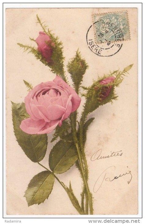 313 best images about language of the rose on pinterest pink roses postcards and vintage cards. Black Bedroom Furniture Sets. Home Design Ideas