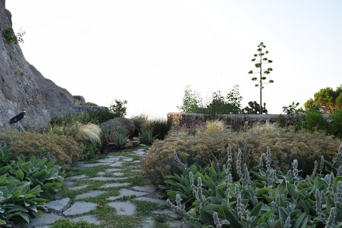 Drought-tolerant perennial planting on a Tuscan island. Low screening provides privacy to lawn space at the end, without creating a barrier in the wind-swept location.