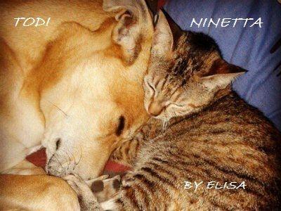 Pulci nel gatto e nel cane trattamenti naturali, prodotti naturali contro pulci zecche, come trattare la casa, la trappola fai da te, spray contro parassiti