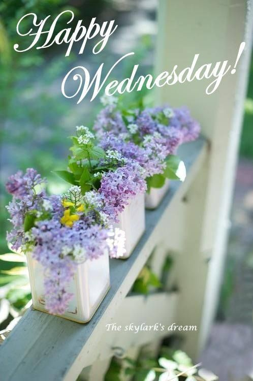 124 best images about Day 3 Wednesday on Pinterest | Hump ... |Wednesday Flowers