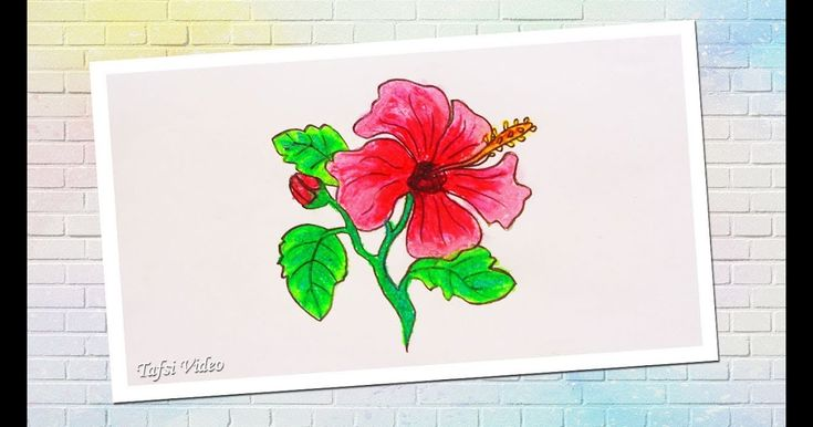 Sketsa Gambar Bunga Sepatu Yang Mudah Digambar