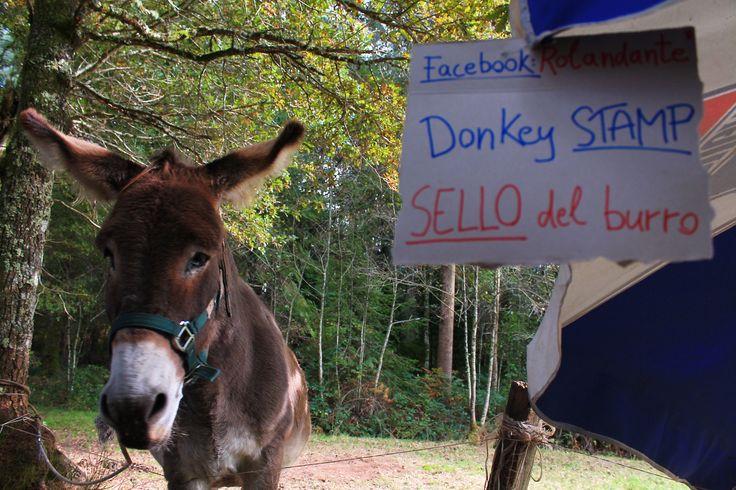 #heloveswalking #donkey #caminodesantiago #travel #spain