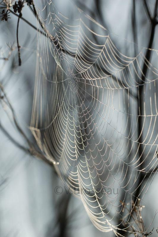 Toile d'araignée - photo de V.Brosseau