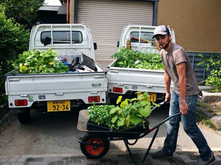 farming at Hoshina Farm in Obuse, Nagano Prefecture, Japan #hapakuna