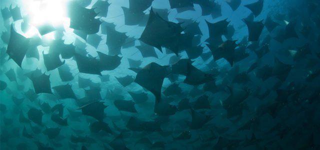 """Nicht verpassen: Dokumentarfilm """"A Plastic Ocean"""" auf der Ocean Film Tour"""