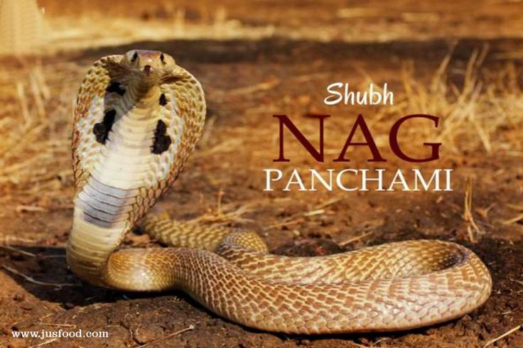 May lord shiva bless you and your family on the auspicious occasion of Nag Panchami  #NagPanchami