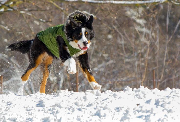 Trooper is lovin' the fresh snow!