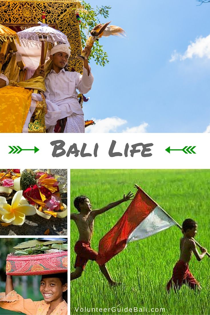 Discover the ins and outs of life in Bali on this board. This board is brought to you by: www.volunteerguidebali.com  #bali #volunteering