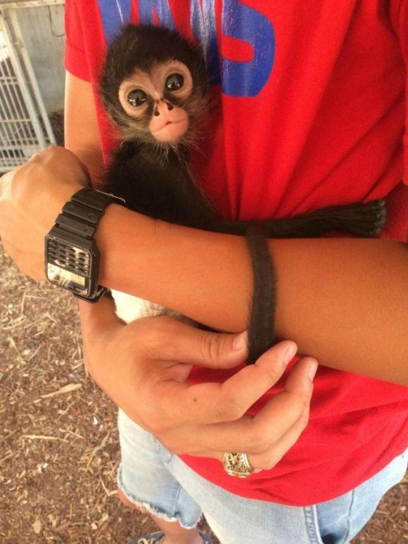 adorable little monkey hugging a man