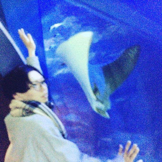 【uru6445】さんのInstagramをピンしています。 《マンタとツーショット! お口が可愛かった!  #水族館#trip #enjoy #wonderful #cute#丸メガネ #前髪あります#青#水槽#instagram #instalike #instapic #古着屋#アクアリウム#aquarium #aqua  #アクアパーク品川 #品川プリンスホテル》