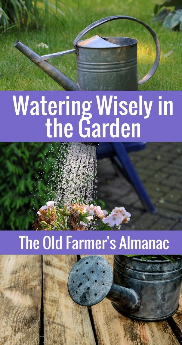Learn how to water your garden wisely with The Old Farmer's Almanac!