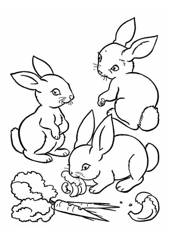45 disegni di conigli da colorare  pagine da colorare per