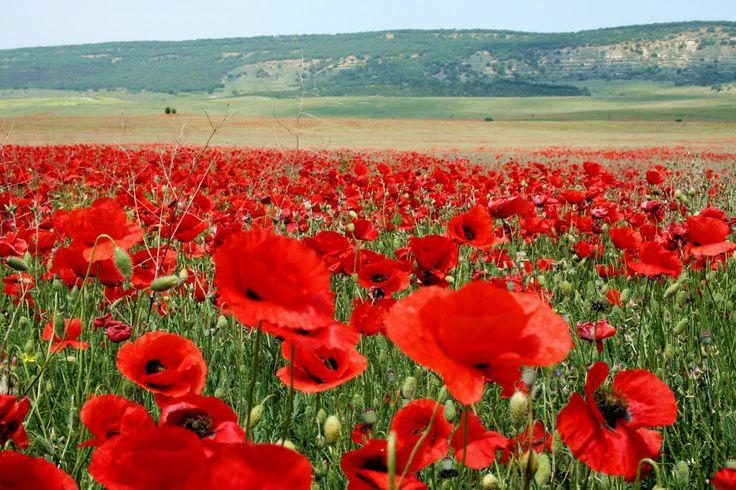 Red Poppy - a village in the region of Crimea Bakhchisaray. Красный Мак - село в Бахчисарайском районе Крыма