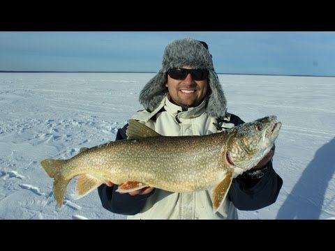 87 best images about ice fishing adventures on pinterest for Best ice fishing sonar