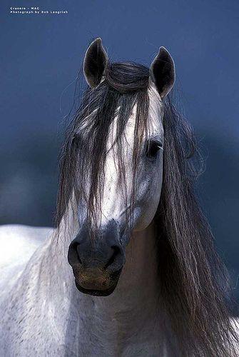 pre-horse-crusero-21 / US