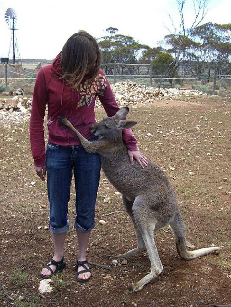 PHOTOS AnimalHuman Hugs That WIll Melt Your Heart Kangaroos - 25 heartwarming moments animals hugging