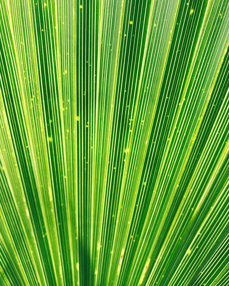 #green #lines #nature