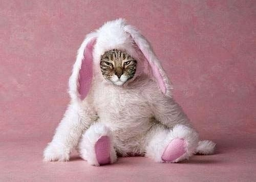 easter bunny doesnt look so happy....: Kitty Cat, Funny Bunnies, Funny Animal Pics, Easter Bunnies, Crazy Animal, Cat Costumes, Grumpy Cat, Weights Loss, Cat Lady