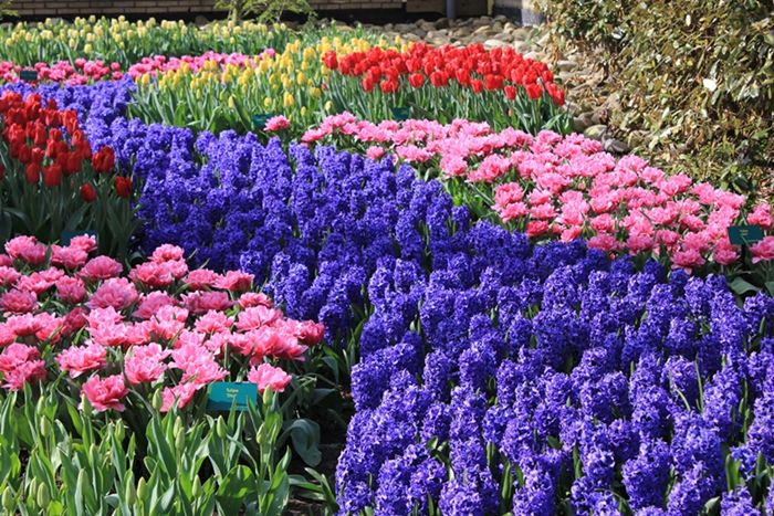 Photo of Amsterdam Keukenhof Gardens and Tulip Fields Tour from Amsterdam Beautiful Gardens