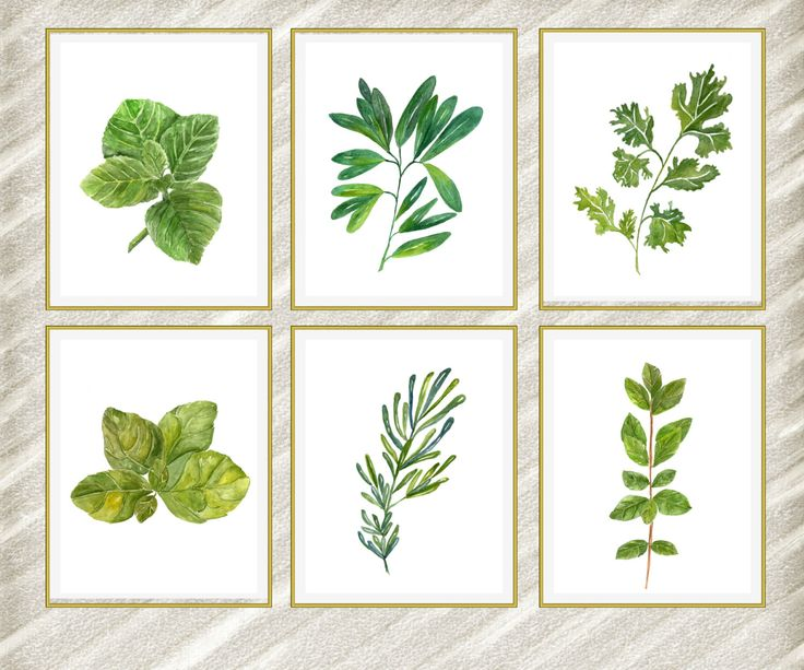"Watercolor herbs print: ""HERB POSTERS"" Kitchen Wall Decor botanical kitchen prints Kitchen Printable Herbs Kitchen Herb kitchen art set of 6 by LolaPrintable on Etsy https://www.etsy.com/listing/384323744/watercolor-herbs-print-herb-posters"