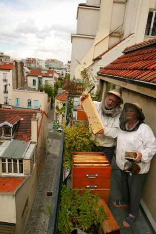 The Malvezins observe  a shallow frame  on their Parisian balcony.  Equipped with veiled hats  and smoker in hand,  these bee lovers  pursue their passion  and give the city  a breath of country air.