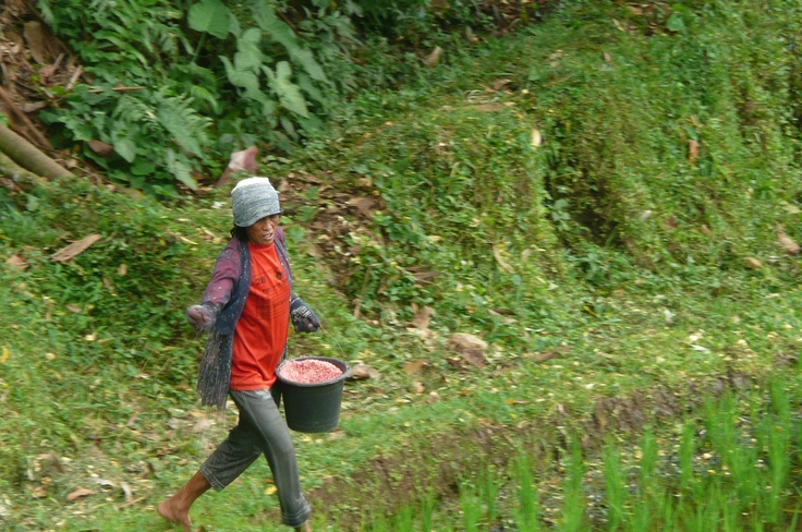 Spreading the fertilizer by hand. (1)