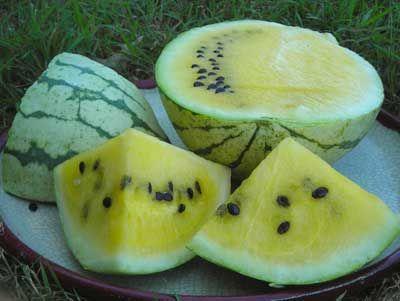 Early Moonbeam Watermelon 2 g