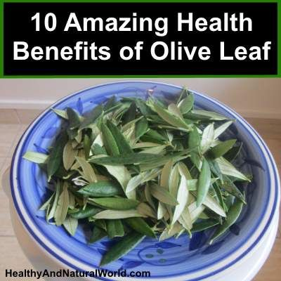 10 Amazing Health Benefits of Olive Leaf