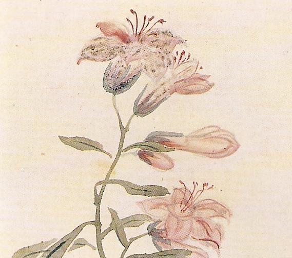심사정 백합 Shim Sajung 1707-1769 Josun Dynasty Korea