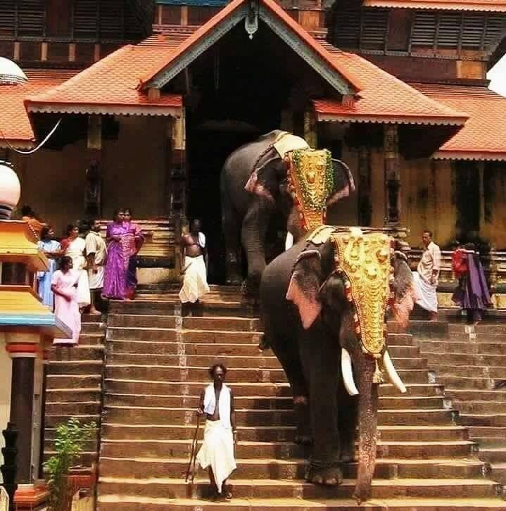 Monsoon Holidays In Kerala: 25+ Best Ideas About Kerala On Pinterest