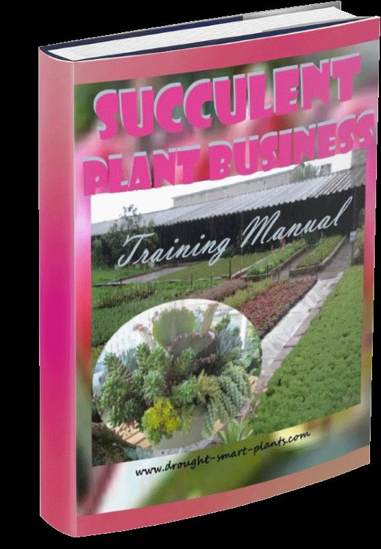 Start Your Own Succulent Plant Business Learn How Here Plants Succulents Planting