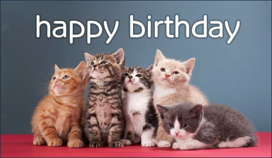 Happy Birthday!  Birthday kittens