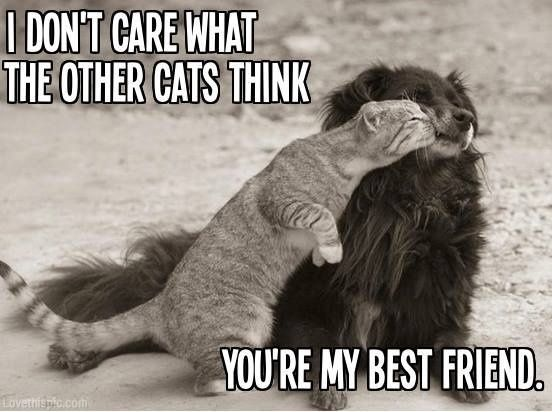 Funny Animal I Love You Quotes : My best friend quotes cute animals friends cat dog Quotes ...