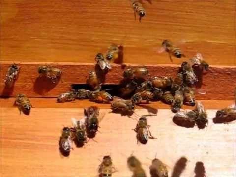 Natural Beekeeping Ross Conrad Pdf Download fouine schemas starcraft qualite alphabetisation
