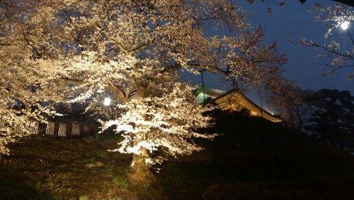 2015년 강릉경포벚꽃잔치 야경