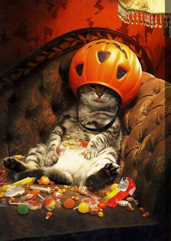 Chat qui s'est gavé de bonbons pour Halloween