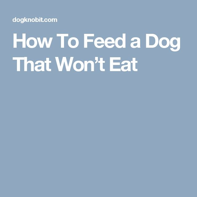 How To Feed a Dog That Won't Eat