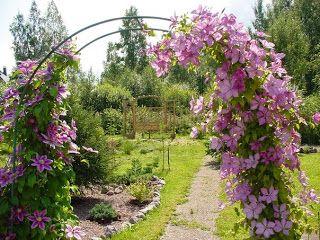 Клематис - выращивание, размножение, уход http://www.myflora.com.ua/index.php?option=com_content&task=view&id=174