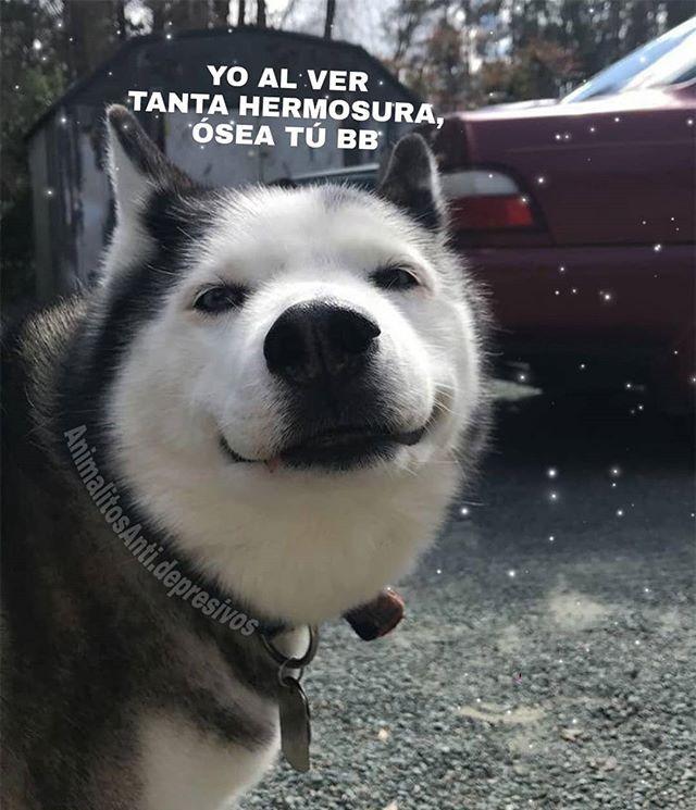La Imagen Puede Contener Texto Husky Memes Husky Funny Dog Quotes Funny