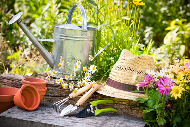 Gardening jobs in Winter? Yes you can, and you should! Check out our new blog for top tips to get an eco-friendly garden here http://www.trueshopping.co.uk/info/blog/grow-greener-top-tips-easy-eco-friendly-garden/