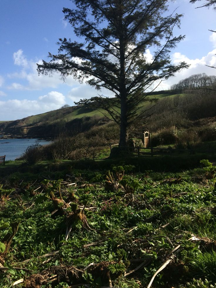 Walking to the Helford River