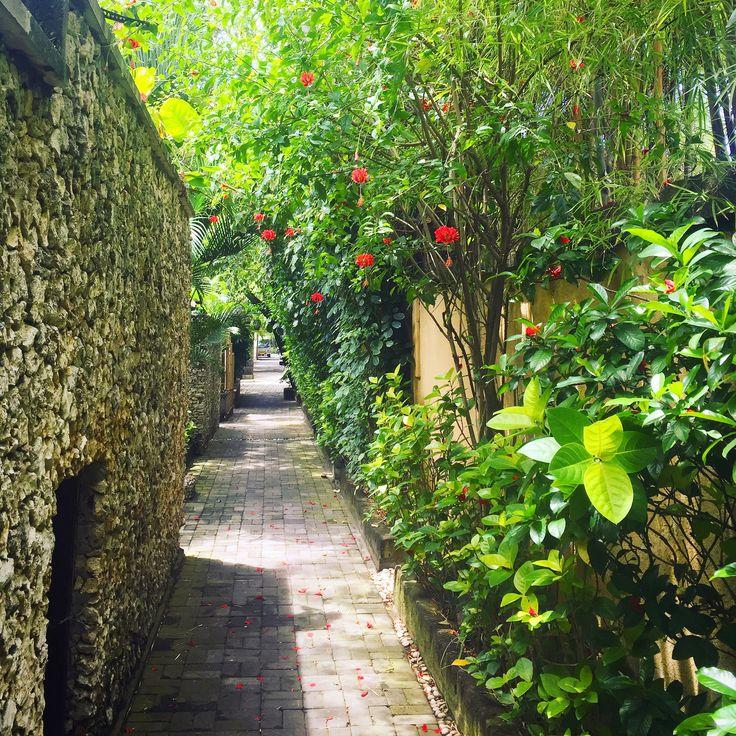 Reasons to come to Kubu #66: Nature… ☀️🌴🍀🌺💖  www.villakubu.com #villakubu #seminyak #luxury #balivilla #islandlife #love #wanderlust #sanctuary #tropicalparadise