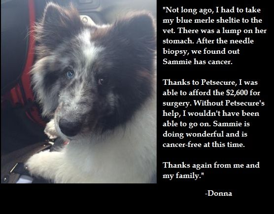 We love to hear about the ways pet health insurance has helped you and your beloved pets in their time of need. Here's Donna's story about her experience with Petsecure when her dog Sammie became sick.  If you have a story about Petsecure helping with your own pet's medical care, let us know!