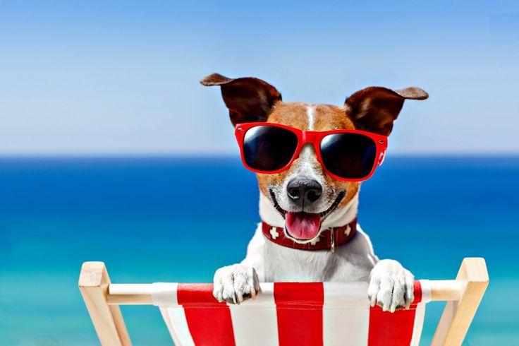 Vacanze con il cane: come organizzare le vacanze con il proprio animale? Quali i…