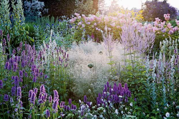 piet oudolf - native plants - perennials:  deschampsia purple, lilac, veronica / background:  pink flowers of filipendula rubra magnifica