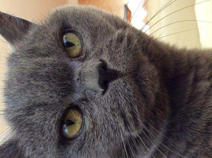 Miss Kitty loves the camera