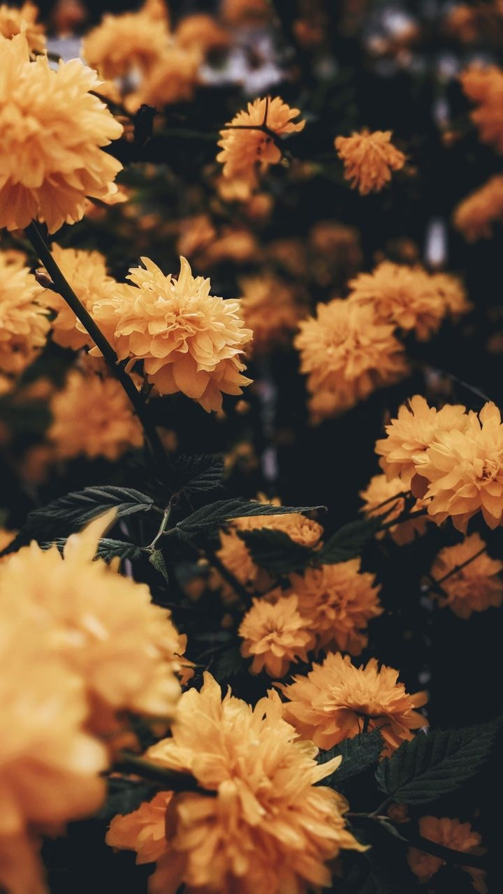 yellow flowers nature background iPhone | Backgrounds / Wallpapers in 2019 | Flower wallpaper ...