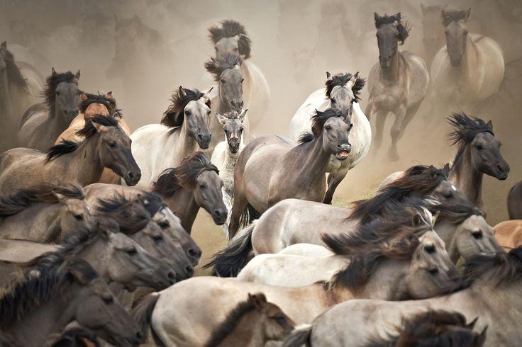 """Über 1.000 Ideen zu """"Fototapete Pferd auf Pinterest""""  Appaloosa ..."""
